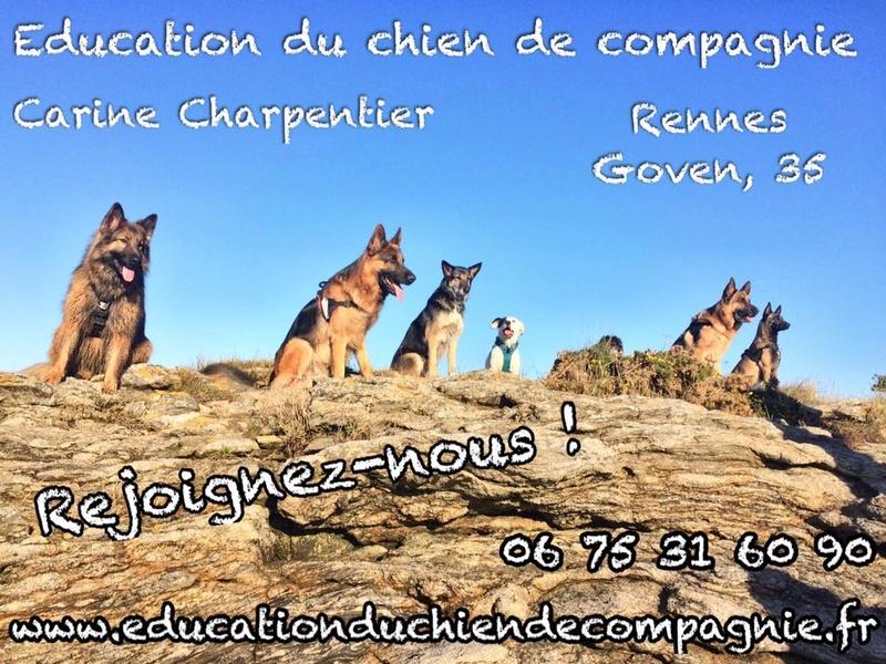 Education du chien de compagnie.fr 15894810