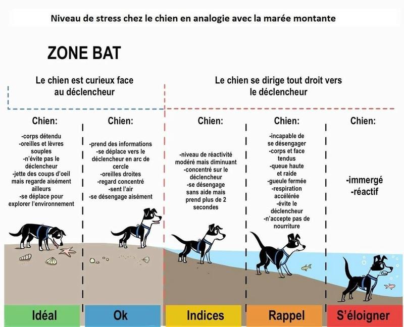 Behavior Adjustment Training (BAT) - Page 11 Bat10
