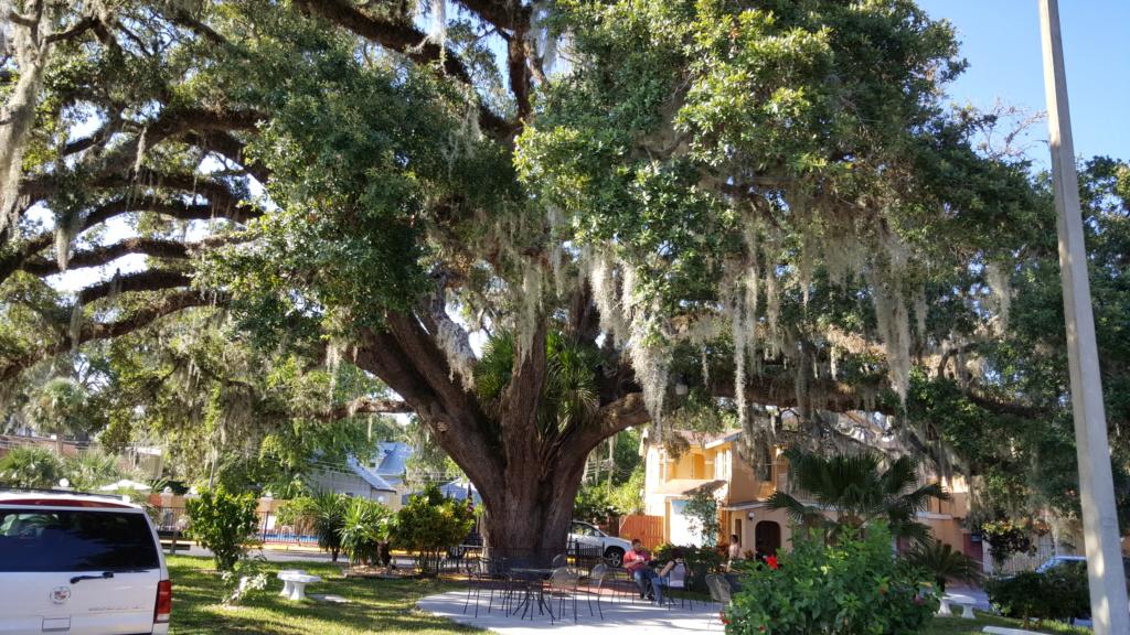 Tampa - Savannah - St Augustine  - Orlando - Aout 2016 20160834