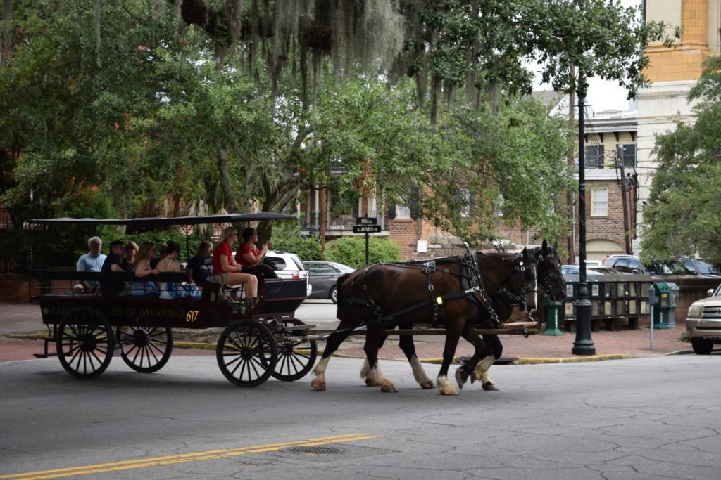 Tampa - Savannah - St Augustine  - Orlando - Aout 2016 Dsc_0312