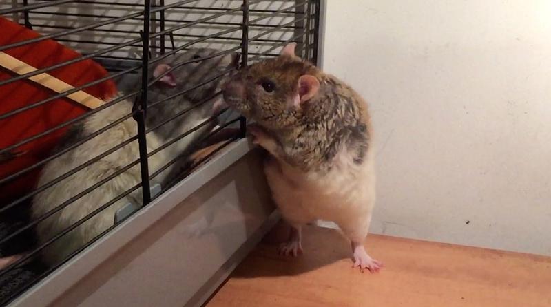 Et voici notre bébé Rat des champs : Ratatouille  - Page 5 1yre_r10