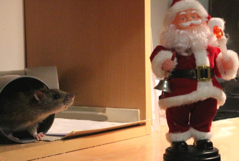 Et voici notre bébé Rat des champs : Ratatouille  - Page 4 Concou10