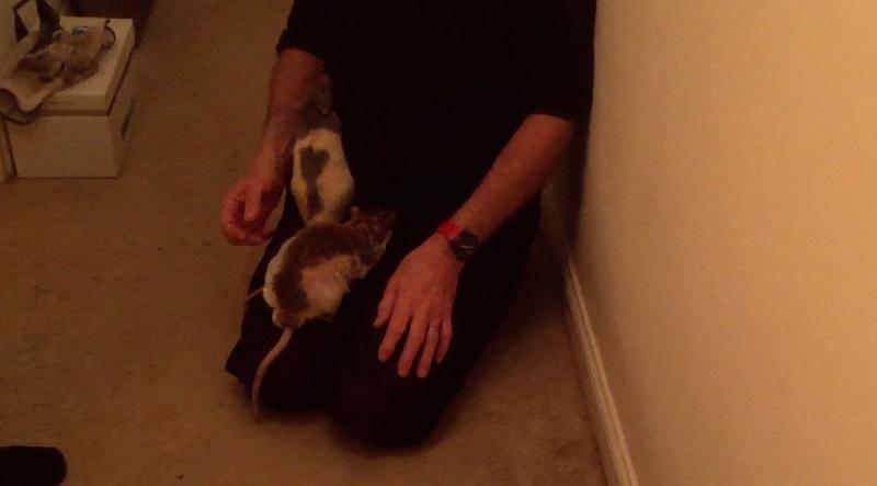 Et voici notre bébé Rat des champs : Ratatouille  - Page 6 Couloi10