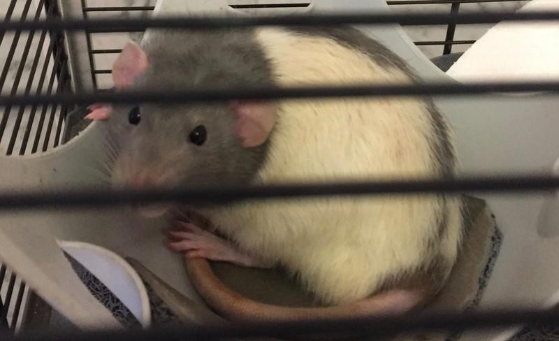 Et voici notre bébé Rat des champs : Ratatouille  - Page 4 Img_6312