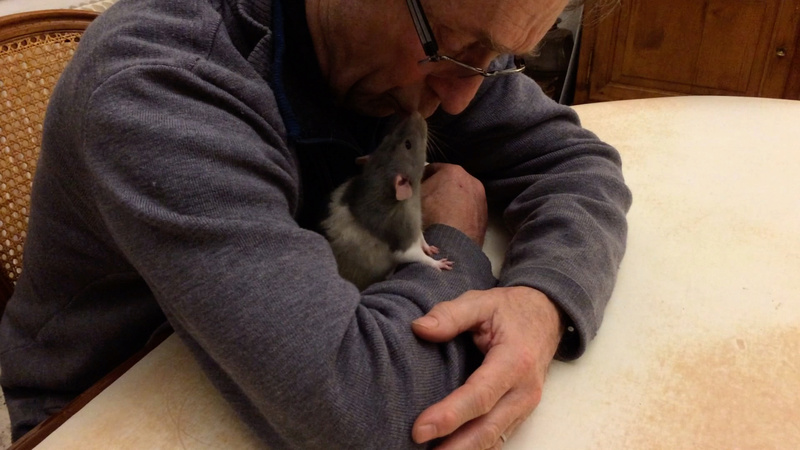 Et voici notre bébé Rat des champs : Ratatouille  - Page 5 Jumbob10