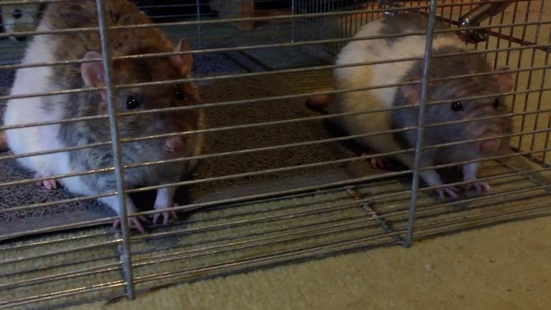 Et voici notre bébé Rat des champs : Ratatouille  - Page 6 Sam_ju10