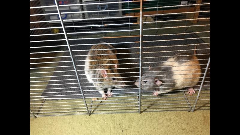 Et voici notre bébé Rat des champs : Ratatouille  - Page 6 Sam_lu11