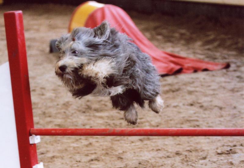 Et voici notre bébé Rat des champs : Ratatouille  - Page 5 Wittes10