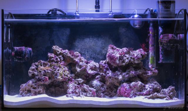 Nano 54l Aquari16