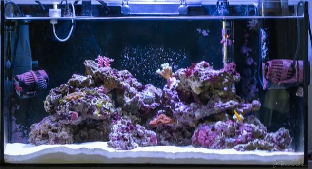 Nano 54l Aquari25