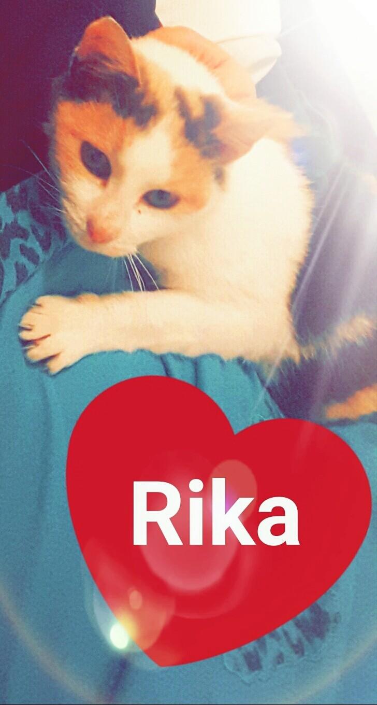 Ruby ex Rika, née en décembre 2015 20161210
