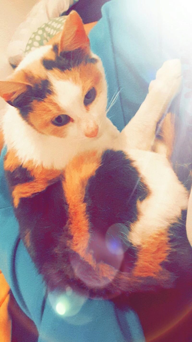 Ruby ex Rika, née en décembre 2015 20161211