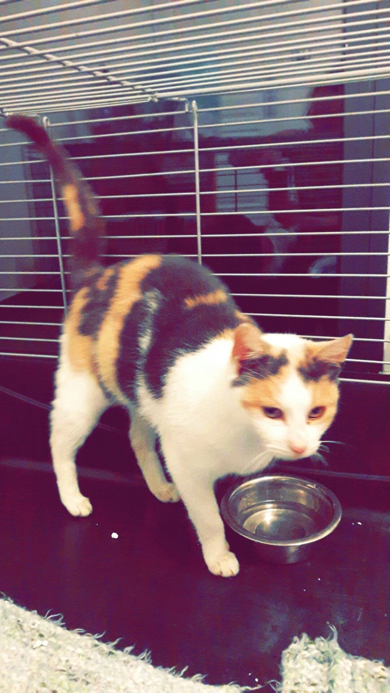 Ruby ex Rika, née en décembre 2015 Snapch18