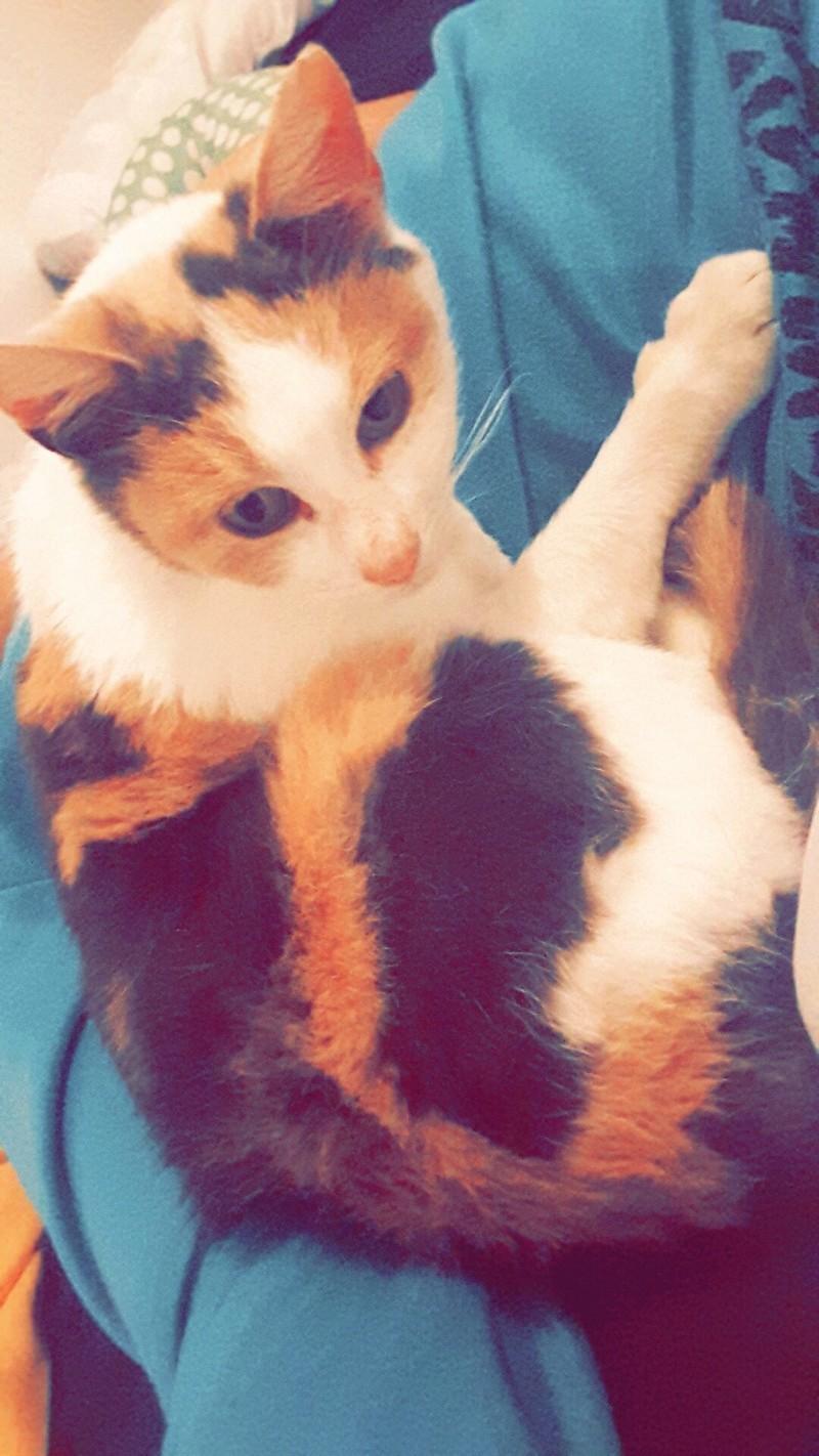 Ruby ex Rika, née en décembre 2015 Snapch19