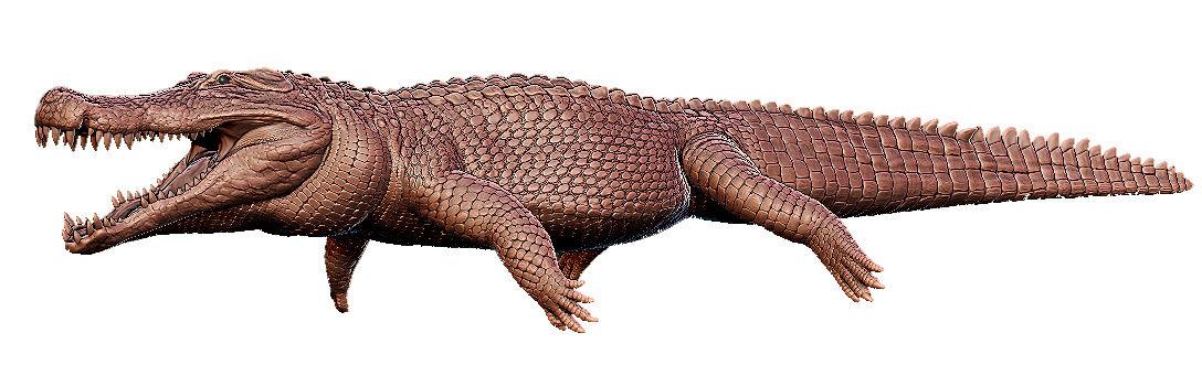 Deinosuchus 3D Model Deinos10