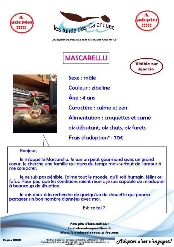 Mascarellu 15390610