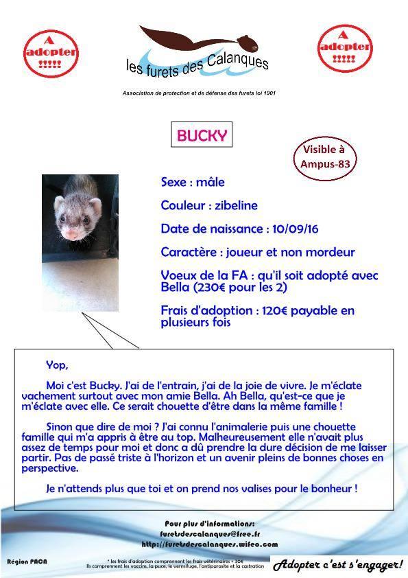 Bucky 16508110