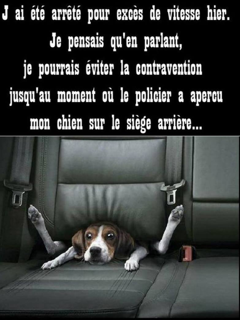 HUMOUR - blagues - Page 6 16300410