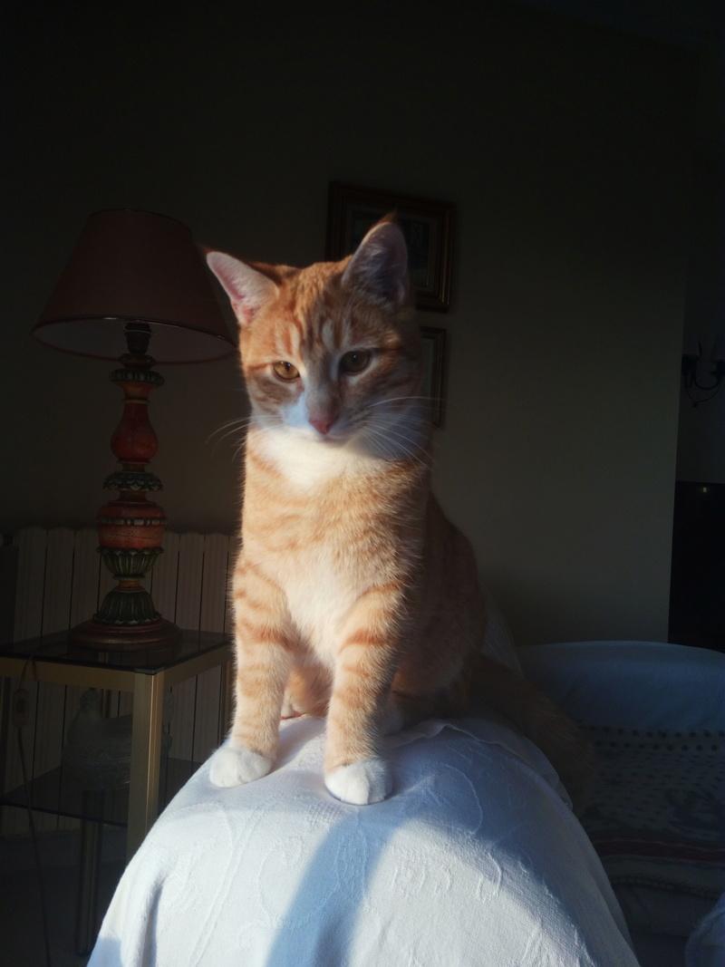 miel - Miel, mâle roux et blanc, type européen, né en jan 2016 09610