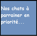 Justin, chaton chocolat point, né le 15/05/2014 Chats_10