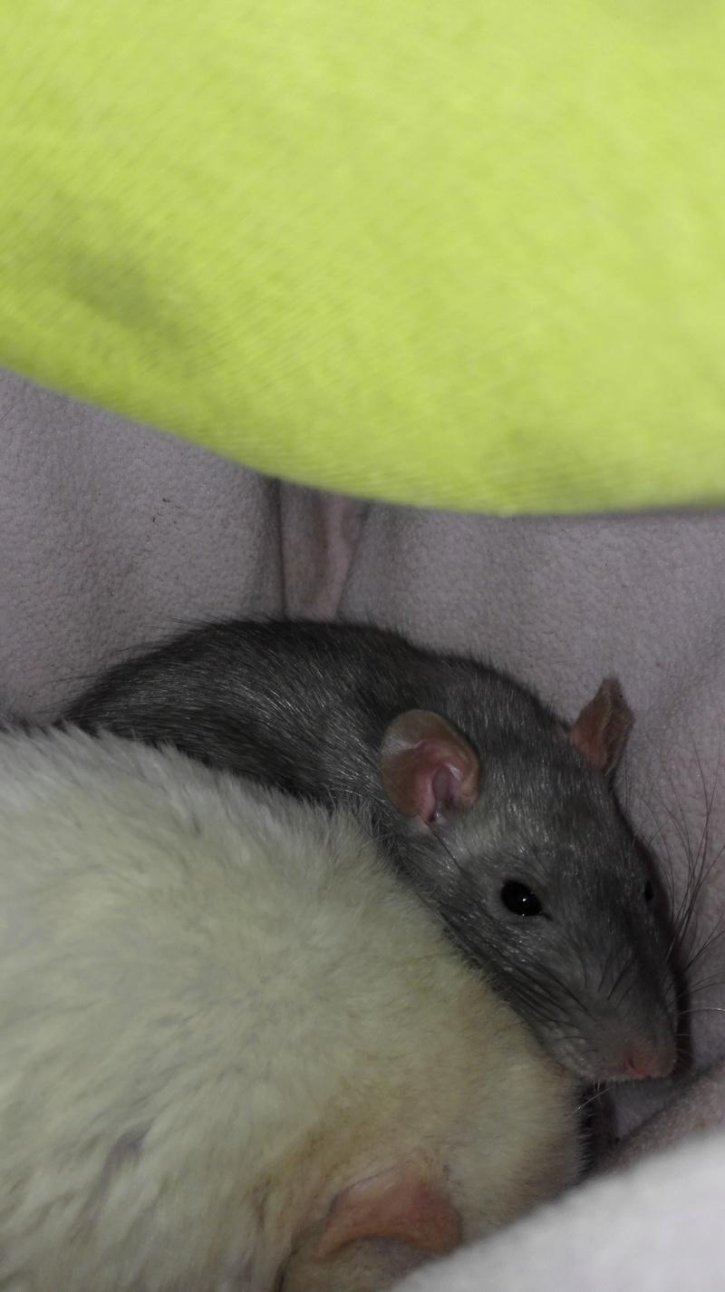 Nala petite ratoune hyperactive de 3-4 mois  [Bordeaux 33] Img_2021