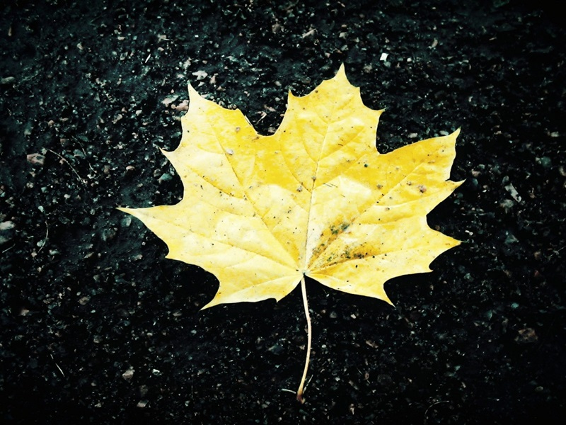 Listovi - Page 2 Leaf-m10