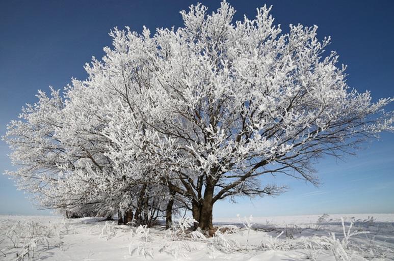 Zimski pejzaži-Winter landscapes - Page 11 Scree268