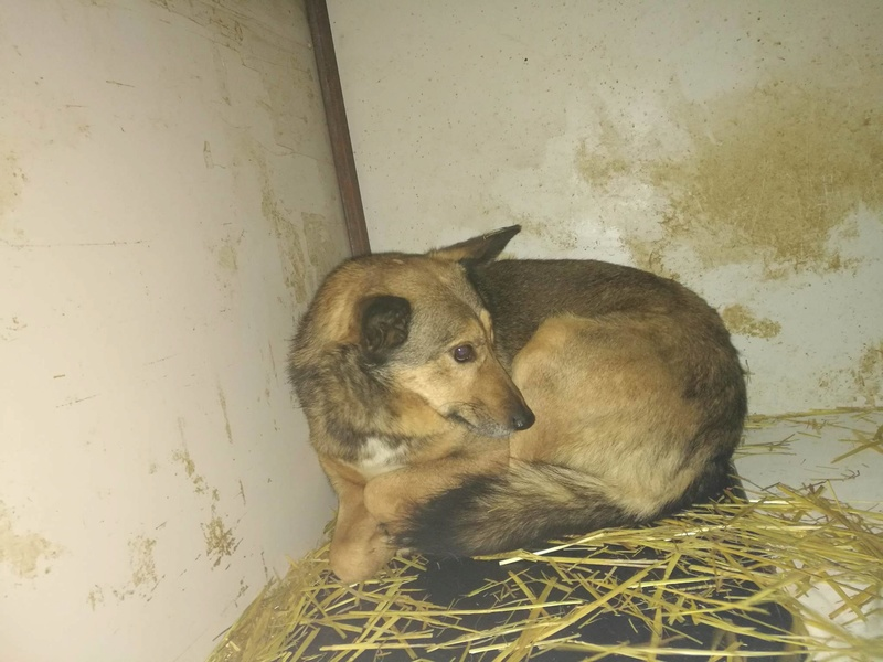 BOGART - mâle né environ 2008, croisé de taille moyenne (Pascani) - REMEMBER ME LAND - DECEDE 16106810