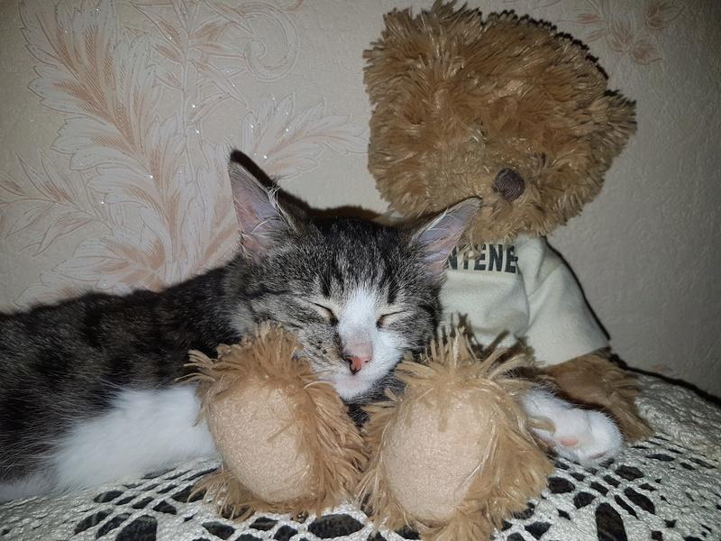 VENUS (ex TITI) - chaton femelle, née avril 2016 - En FA chez Abysse (92) - ADOPTEE PAR ANNE et FATLUM (depart94) 20161125