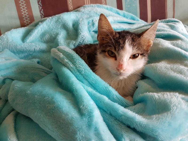 MILKA (ex CLOCHARD) - chaton mâle, né en juin 2016 - En FA chez Abysse (92) - Adopté par Imen (78) 20161129