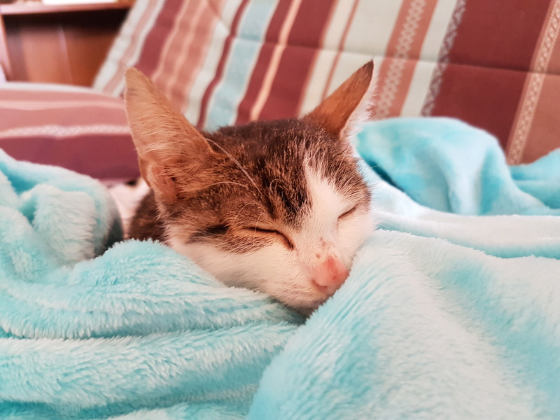 MILKA (ex CLOCHARD) - chaton mâle, né en juin 2016 - En FA chez Abysse (92) - Adopté par Imen (78) 20161132