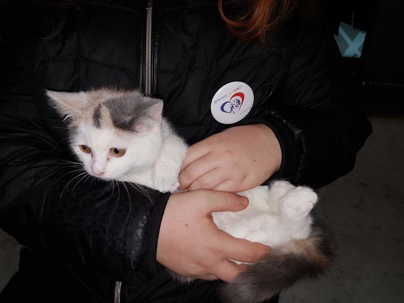 KYTTY - chat femelle, née septembre 2016 - CHEZ LUMINITA - En FA chez Abysse (dpt92) - ADOPTEE PAR SANDRA (depart94) 20161210