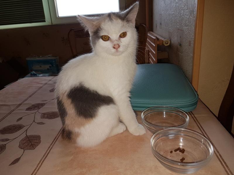 KYTTY - chat femelle, née septembre 2016 - CHEZ LUMINITA - En FA chez Abysse (dpt92) - ADOPTEE PAR SANDRA (depart94) 20161213