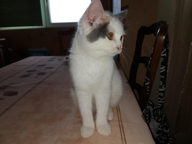 KYTTY - chat femelle, née septembre 2016 - CHEZ LUMINITA - En FA chez Abysse (dpt92) - ADOPTEE PAR SANDRA (depart94) 20161215