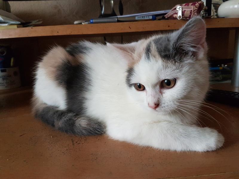 KYTTY - chat femelle, née septembre 2016 - CHEZ LUMINITA - En FA chez Abysse (dpt92) - ADOPTEE PAR SANDRA (depart94) 20161216