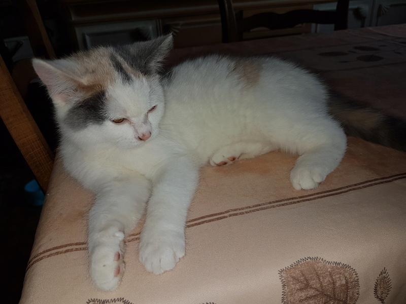KYTTY - chat femelle, née septembre 2016 - CHEZ LUMINITA - En FA chez Abysse (dpt92) - ADOPTEE PAR SANDRA (depart94) 20161217