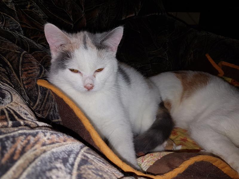 KYTTY - chat femelle, née septembre 2016 - CHEZ LUMINITA - En FA chez Abysse (dpt92) - ADOPTEE PAR SANDRA (depart94) 20170111