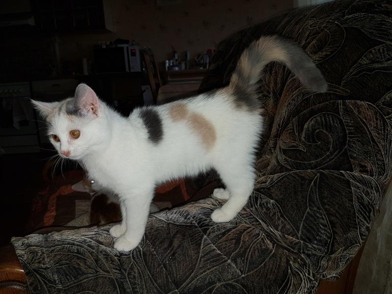 KYTTY - chat femelle, née septembre 2016 - CHEZ LUMINITA - En FA chez Abysse (dpt92) - ADOPTEE PAR SANDRA (depart94) 20170113