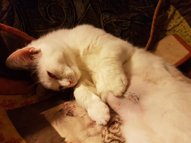 KYTTY - chat femelle, née septembre 2016 - CHEZ LUMINITA - En FA chez Abysse (dpt92) - ADOPTEE PAR SANDRA (depart94) 20170120