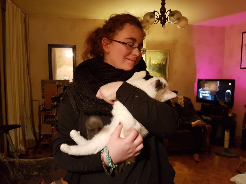 KYTTY - chat femelle, née septembre 2016 - CHEZ LUMINITA - En FA chez Abysse (dpt92) - ADOPTEE PAR SANDRA (depart94) 20170122