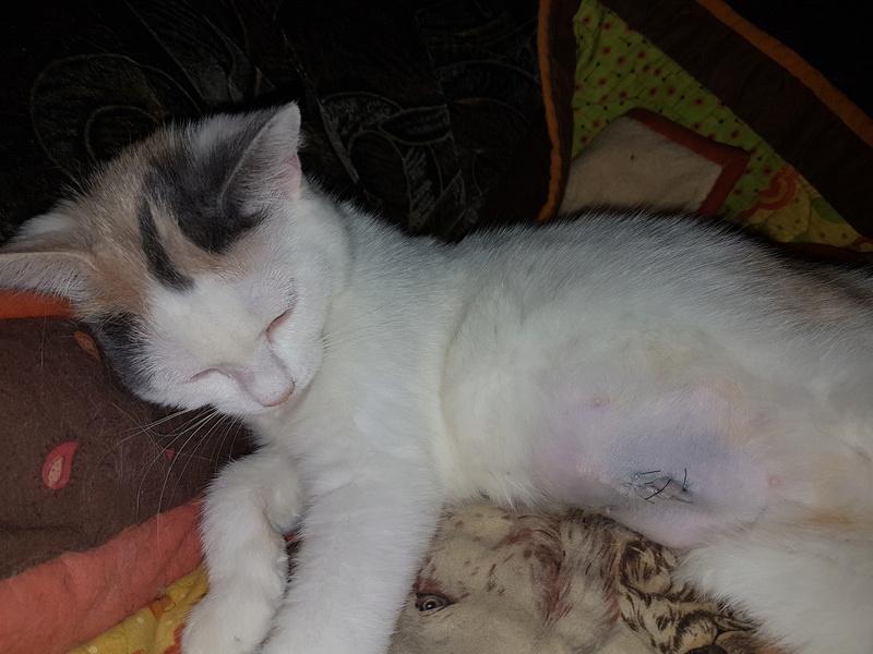 KYTTY - chat femelle, née septembre 2016 - CHEZ LUMINITA - En FA chez Abysse (dpt92) - ADOPTEE PAR SANDRA (depart94) 20170123