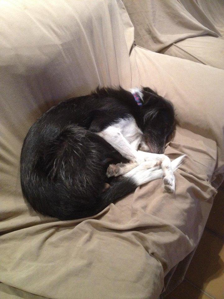 BLACK PEARL, chiot femelle, née en juin 2015 (Pascani)-REMEMBER ME LAND - adoptée par Sonia dans le 57 Black_10