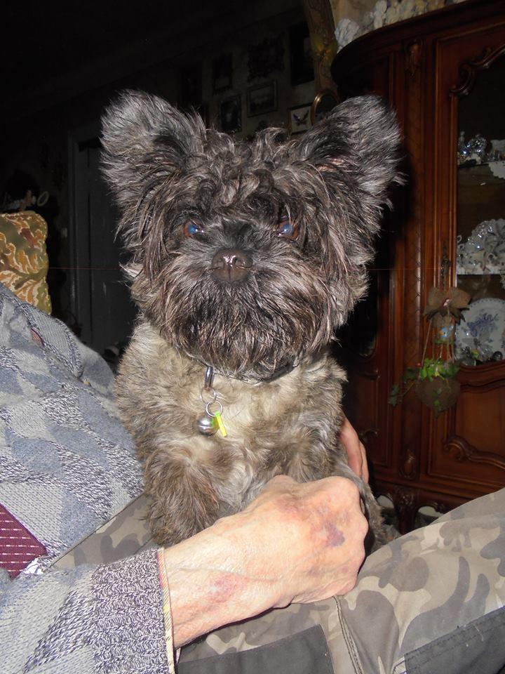 EWOK: mâle croisé cairn terrier né env 2012 - Pascani - adopté par Christine (dpt67) - Page 2 Ewok10