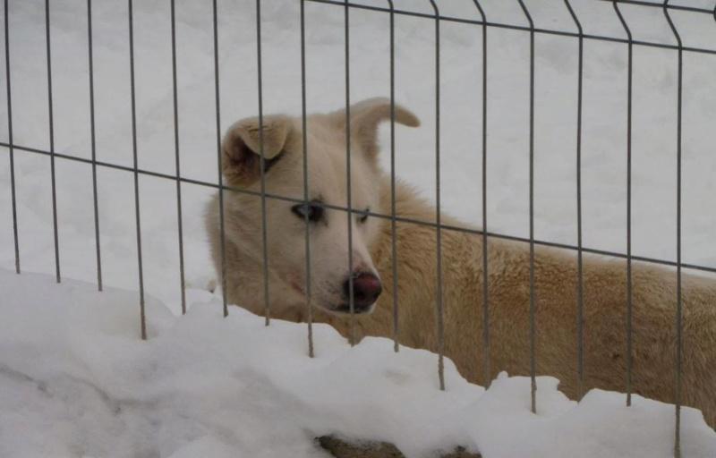 HASCHY, mâle, blanc aux yeux bleus, taille moyenne né env 2014 (Pascani) - adopté en Roumanie - Page 2 Haschy18