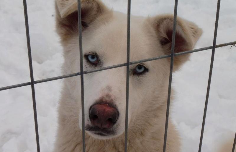HASCHY, mâle, blanc aux yeux bleus, taille moyenne né env 2014 (Pascani) - adopté en Roumanie - Page 2 Haschy19
