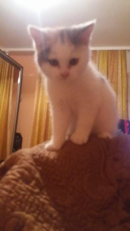 KYTTY - chat femelle, née septembre 2016 - CHEZ LUMINITA - En FA chez Abysse (dpt92) - ADOPTEE PAR SANDRA (depart94) Kytty110