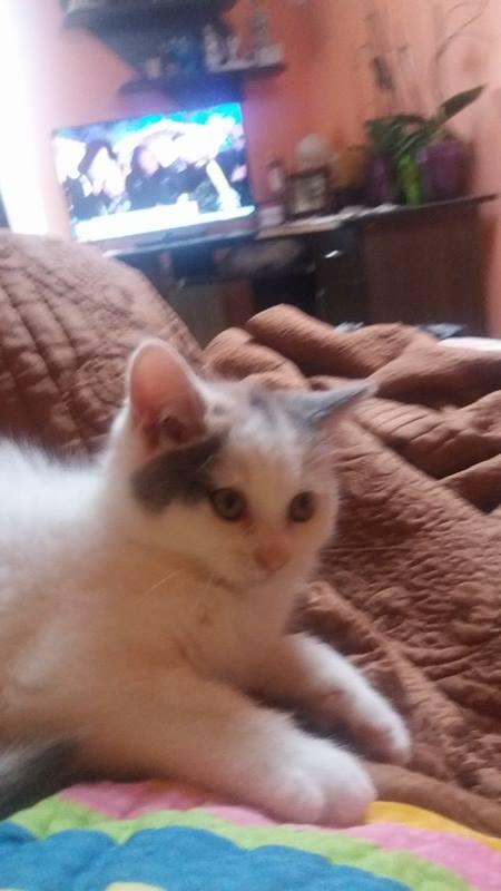 KYTTY - chat femelle, née septembre 2016 - CHEZ LUMINITA - En FA chez Abysse (dpt92) - ADOPTEE PAR SANDRA (depart94) Kytty210