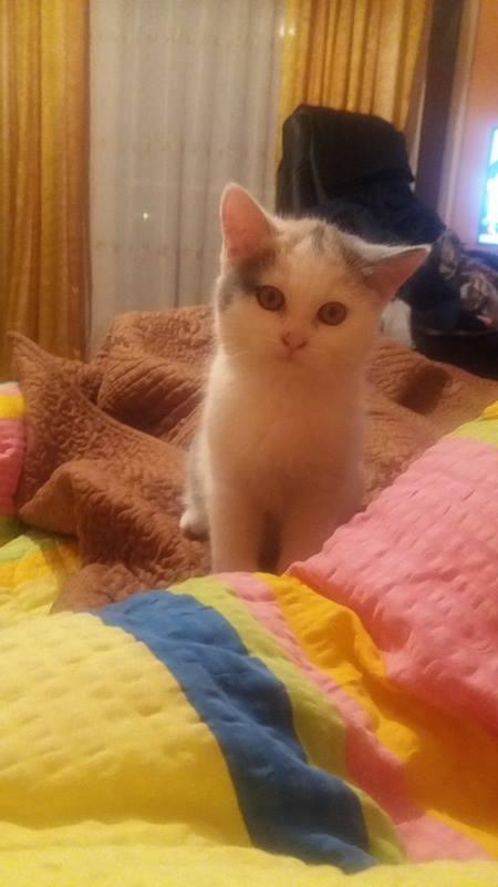 KYTTY - chat femelle, née septembre 2016 - CHEZ LUMINITA - En FA chez Abysse (dpt92) - ADOPTEE PAR SANDRA (depart94) Kytty211