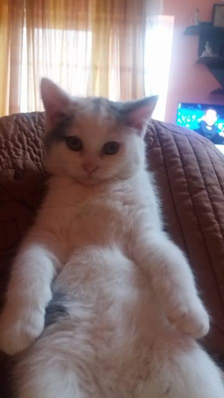 KYTTY - chat femelle, née septembre 2016 - CHEZ LUMINITA - En FA chez Abysse (dpt92) - ADOPTEE PAR SANDRA (depart94) Kytty310