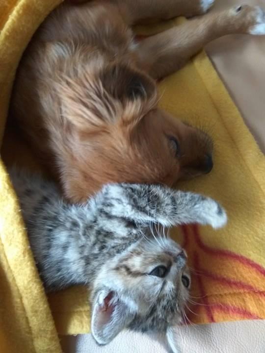 LENNA (ex MANDARINE) - chiot croisé femelle de taille petite, née juin 2016 - Adoptée par  Rebecca (Belgique) - Page 2 Lenna210